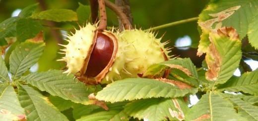 Alberi da frutto i farmers for Alberi simili alle querce
